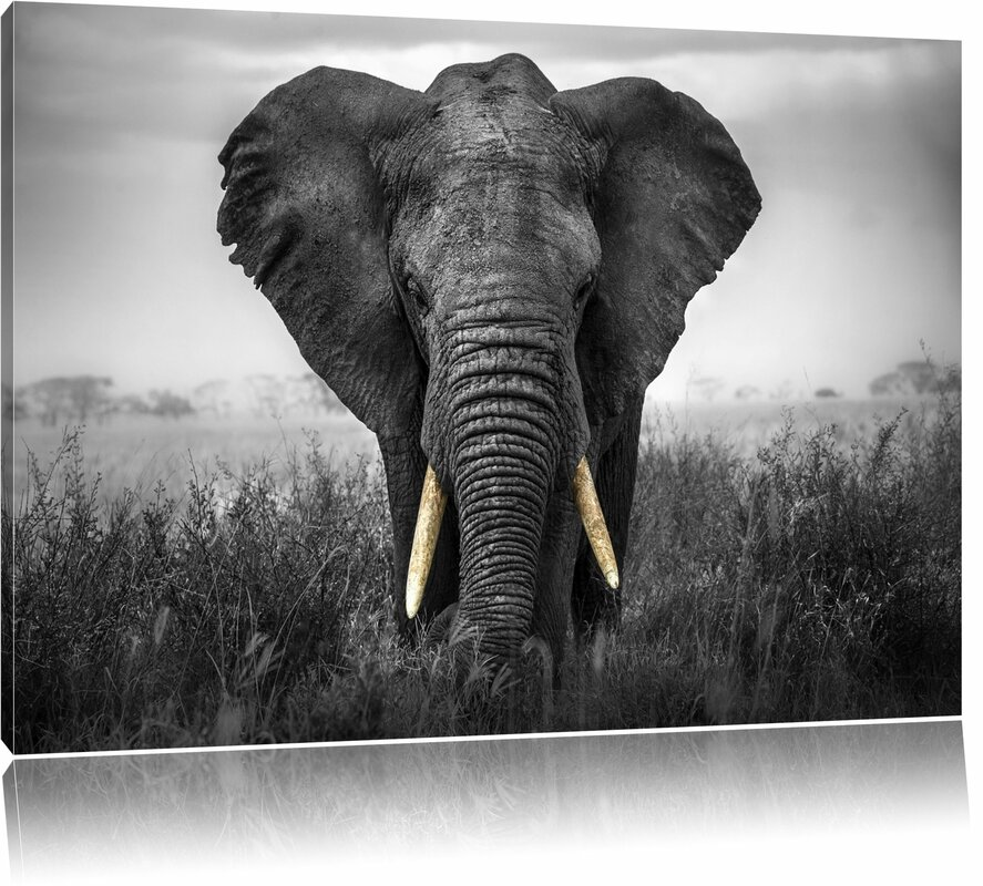 Graceful Elephant Wall Art On Canvas