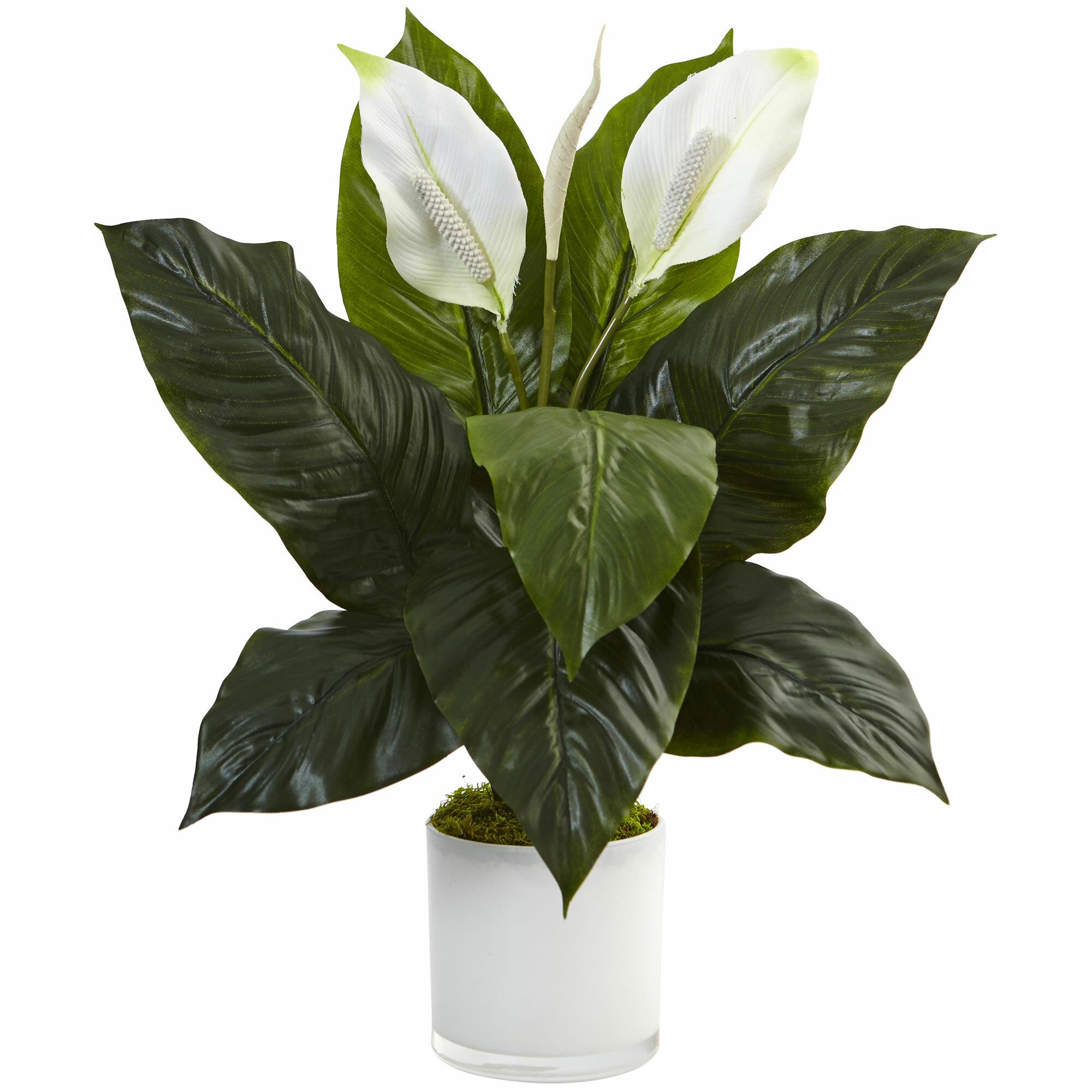 Orren Ellis Artificial Spathiphyllum Flowering Peace Lily Floral