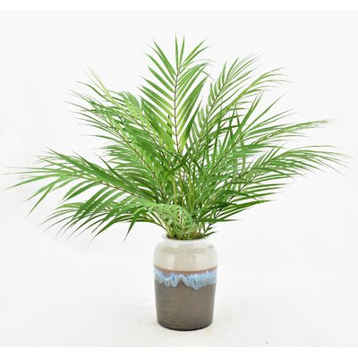 entracing palm tree type house plant. Floor Palm Plant in Ceramic Planter Nearly Natural Silk Areca with Pot  Reviews Wayfair