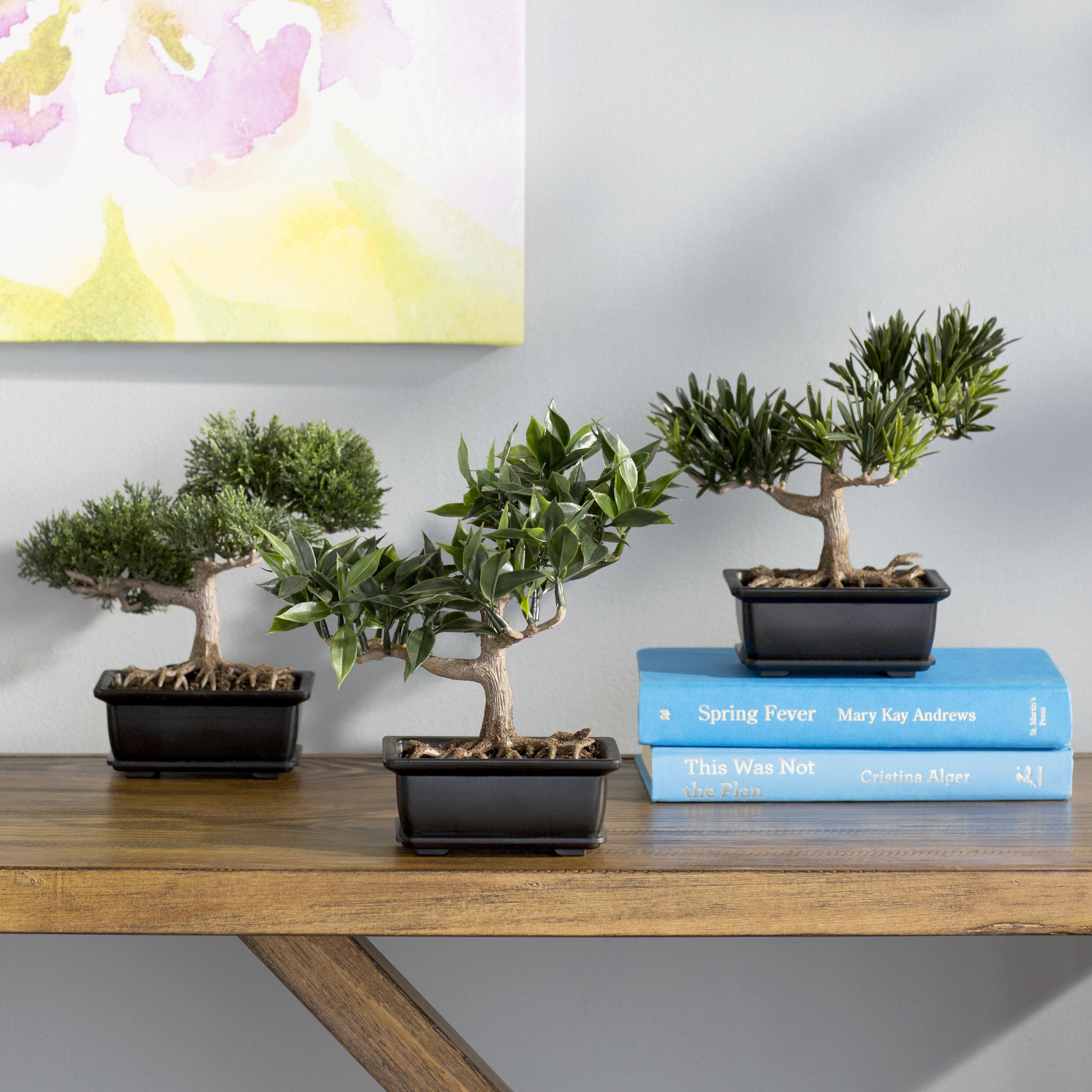 World Menagerie 9 Artificial Bonsai Plant In Planter Reviews Wayfair