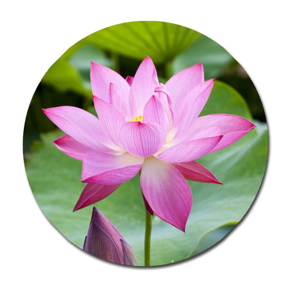 Serge de troyer collection purple lotus flower bloom photographic serge de troyer collection purple lotus flower bloom photographic print wayfair izmirmasajfo
