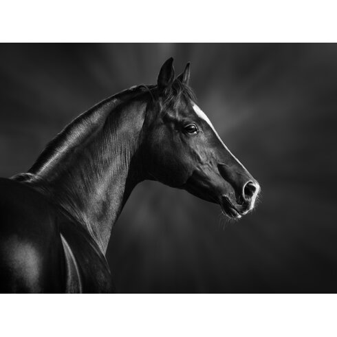 Serge De Troyer Collection Black Horse Profile Framed Photographic