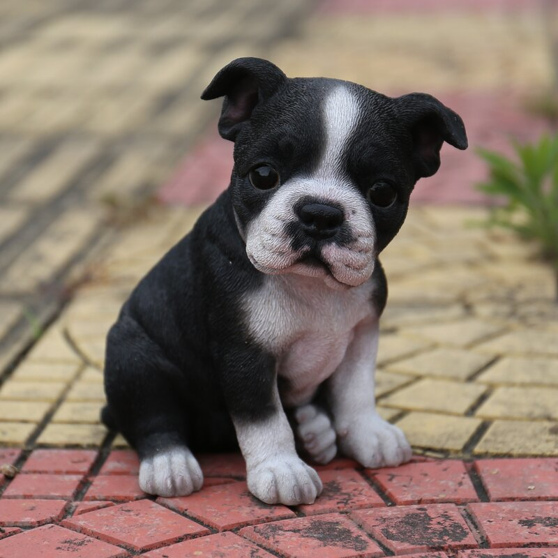 Sitting Boston Terrier Puppy Statue
