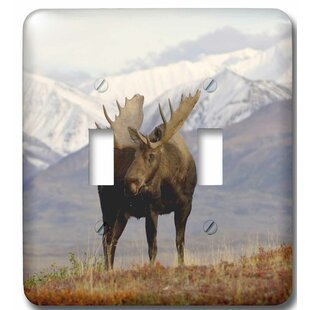 Moose Light Switch Covers Wayfair