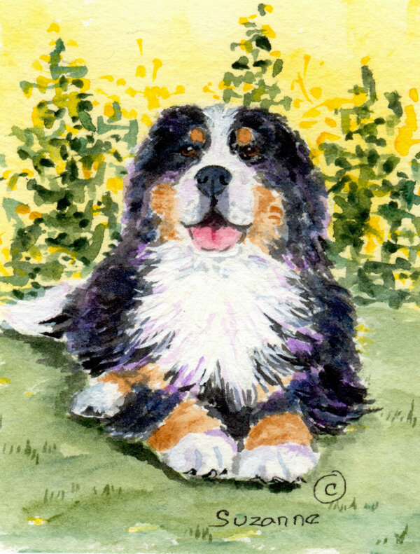 Bernese Mountain Dog 2 Sided Polyester 34 H X 24 W House Flag