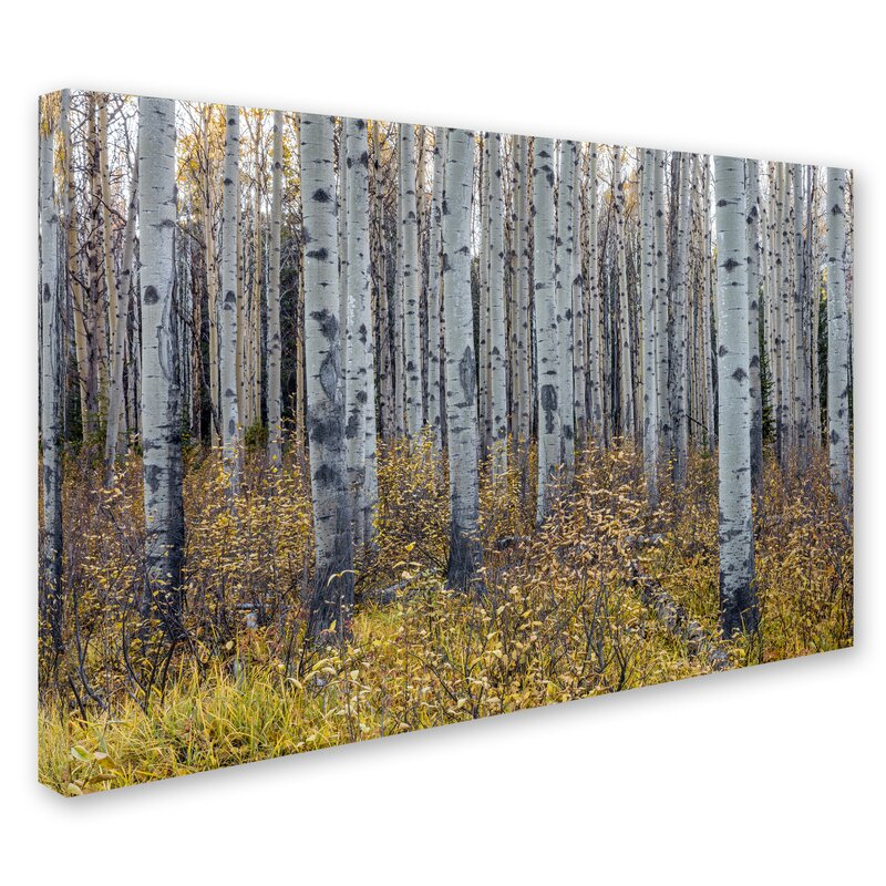 Trademark Art Aspen Trees In Autumn By Pierre Leclerc Photographic Print On Wrapped Canvas Wayfair
