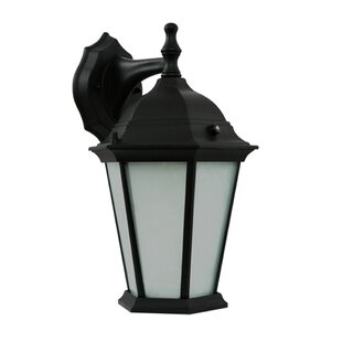 Great Price 1-Light Outdoor Wall Lantern By Efficient Lighting