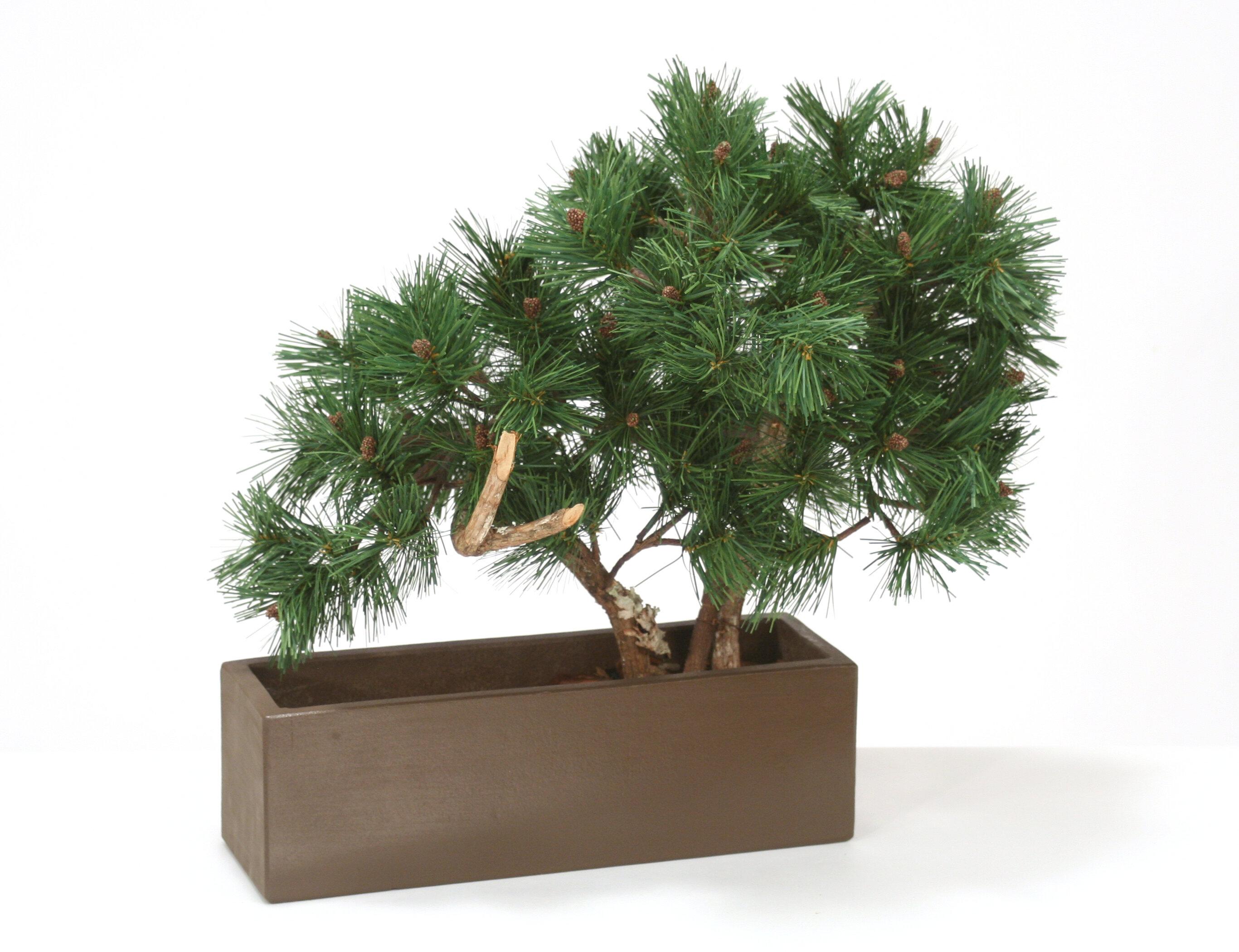 Distinctive Designs Pine Bonsai Tree In Pot Wayfair