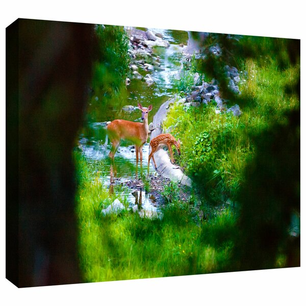 Artwall Deer By Cody York Photographic Print On Wrapped Canvas Wayfair
