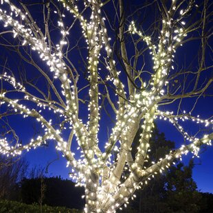 Touch of ECO 225-Light Solar 105 ft. Fairy String Lights