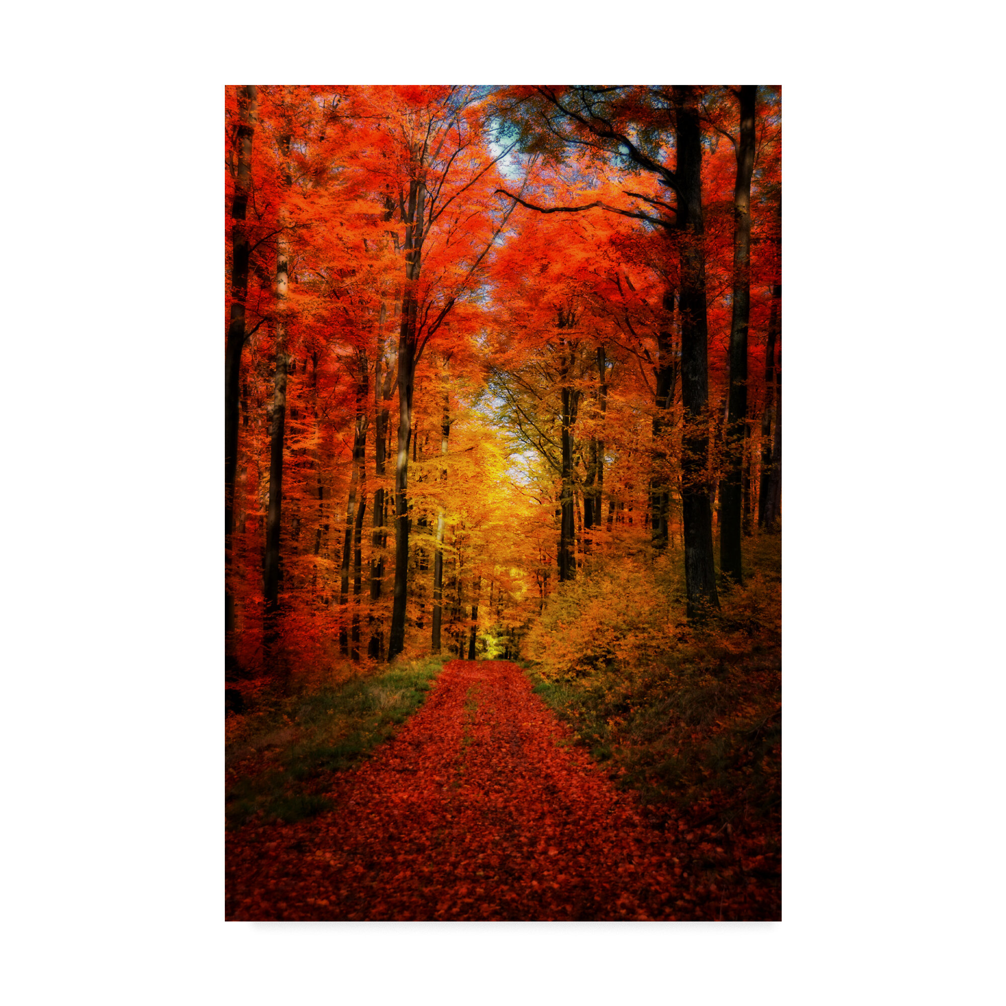 Millwood Pines Forest Garden Photographic Print On Wrapped Canvas Reviews Wayfair