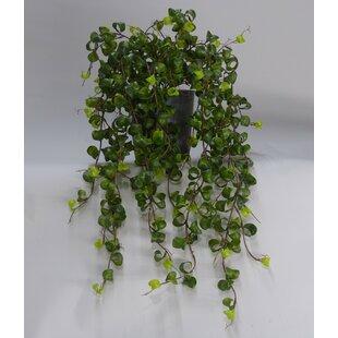 52cm Artificial Foliage Plant In Pot Image