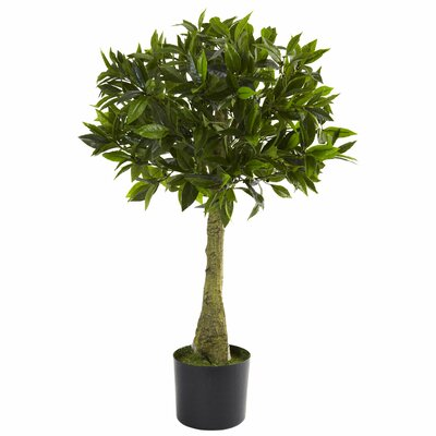 Alcott Hill Bay Leaf Round Topiary in Pot