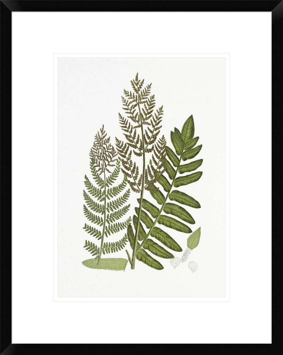 ferns coastal wall art you ll love wayfair Labeled Leaf Diagram flowering fern framed painting print