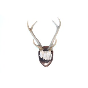 White Deer Antlers Wall Decor from secure.img1-fg.wfcdn.com