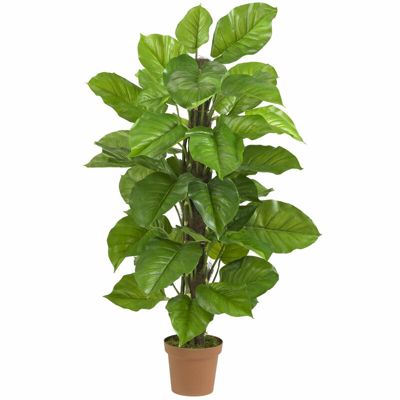 bayou breeze leaf philodendron tree in pot reviews wayfair. Black Bedroom Furniture Sets. Home Design Ideas