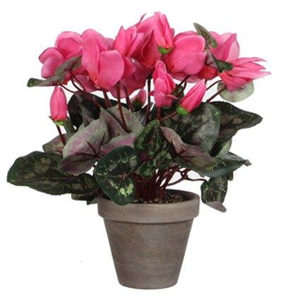 Alpenveilchen im Blumentopf Die Saisontruhe Farbe: Rosa | Dekoration > Dekopflanzen > Pflanzen | Die Saisontruhe