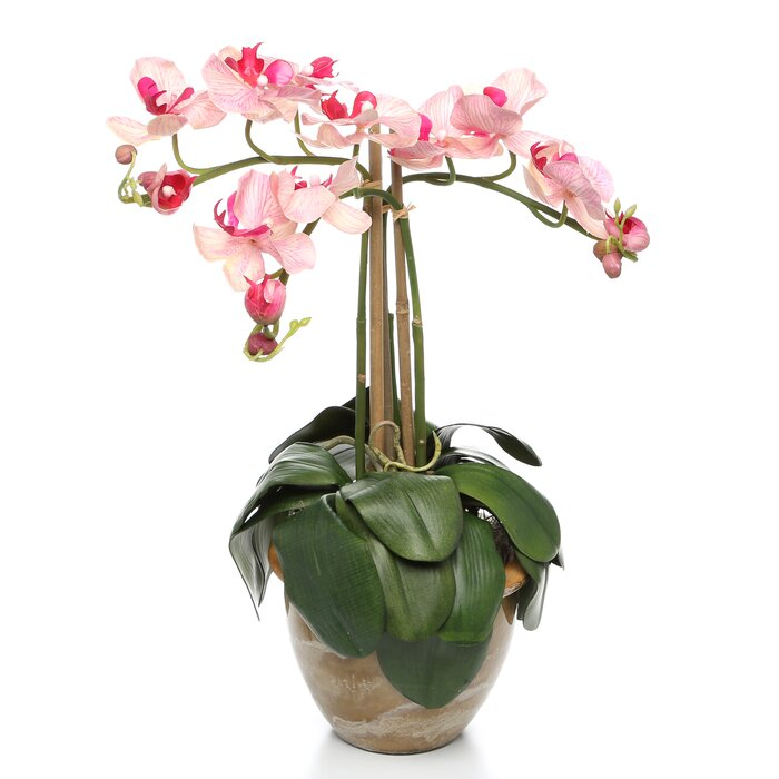 Alcott hill triple mini phalaenopsis silk orchid flowers in pink triple mini phalaenopsis silk orchid flowers in pink white mightylinksfo
