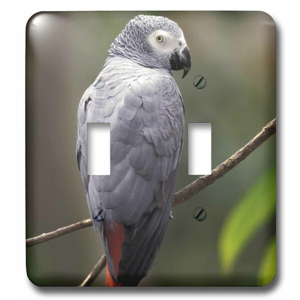 3drose African Parrot Tropical Bird 2 Gang Toggle Light Switch Wall Plate Wayfair