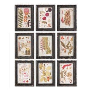 Floret Framed Prints (Set of 9)