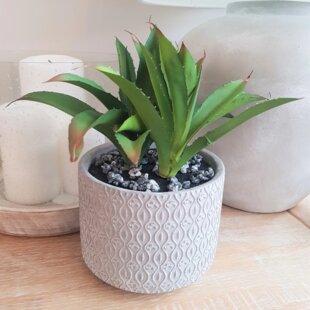 5 Artificial Agrave Succulent In Planter Set Image
