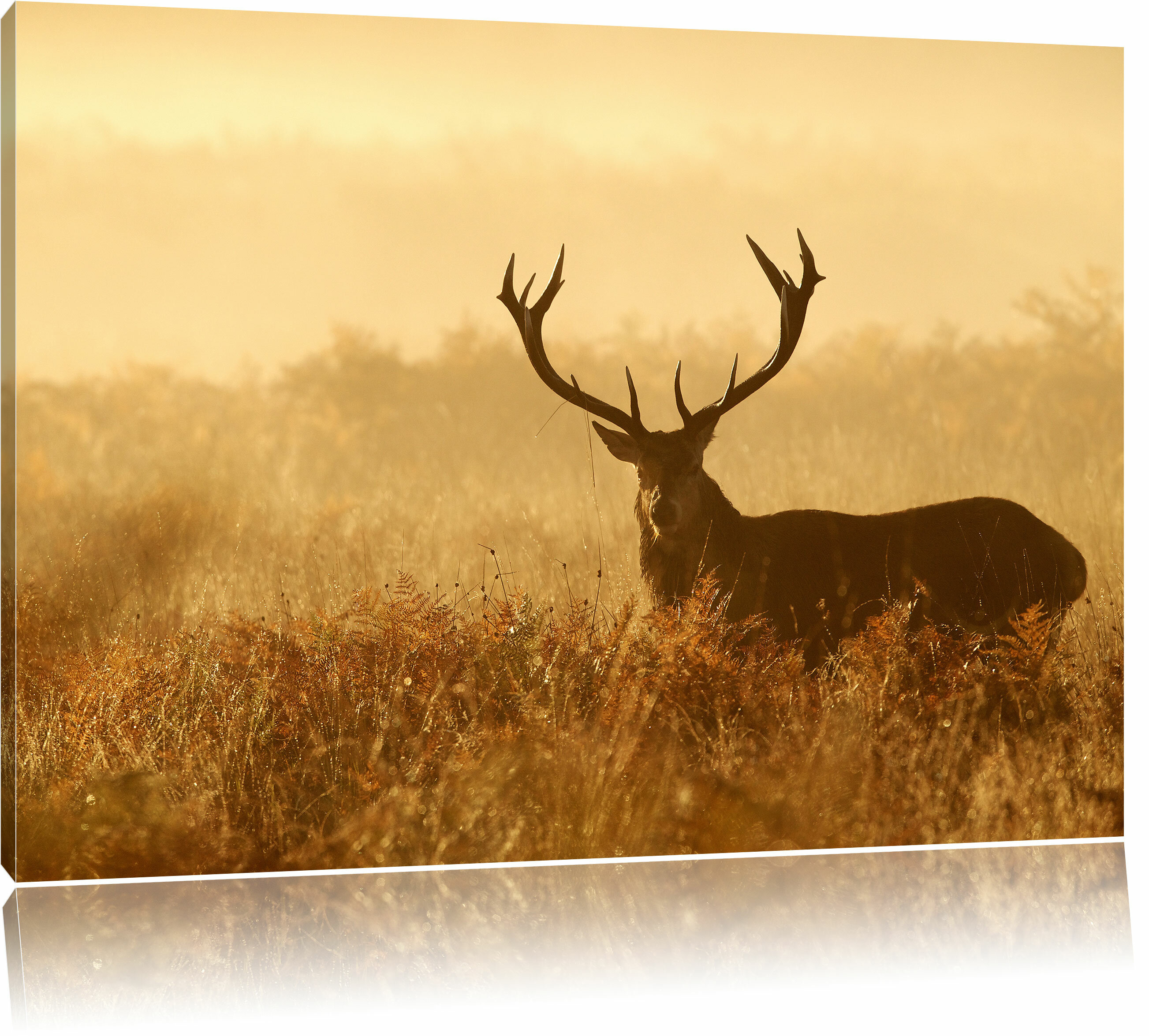 Best Stag Wall Decor Pictures Inspiration - The Wall Art Decorations ...