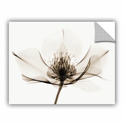 """Hellebore I Graphic Art on Canvas Lark Manor Size: 18"""" H x 24"""" W x 0.1"""" D"""