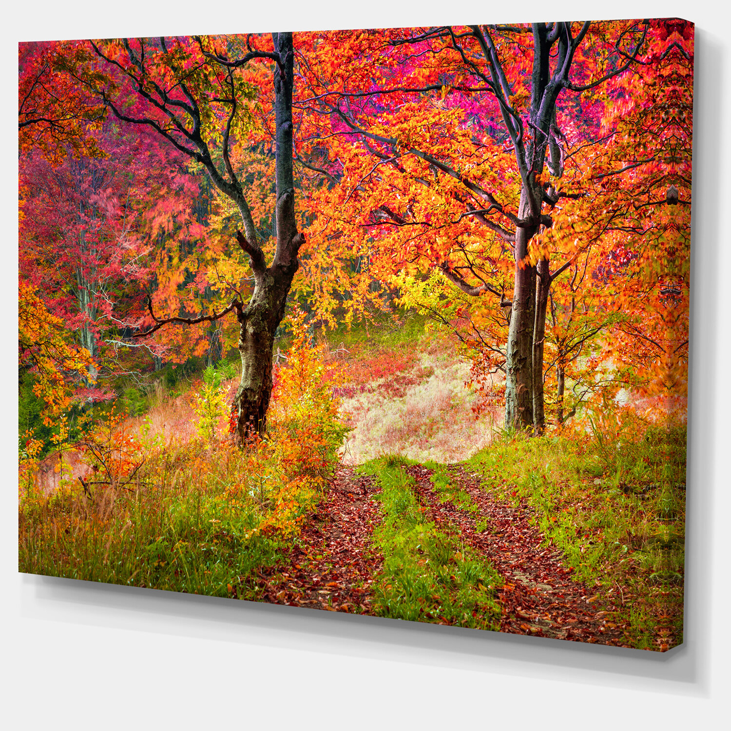 Designart Bright Colorful Fall Trees In Forest Wrapped Canvas Photograph Print Wayfair