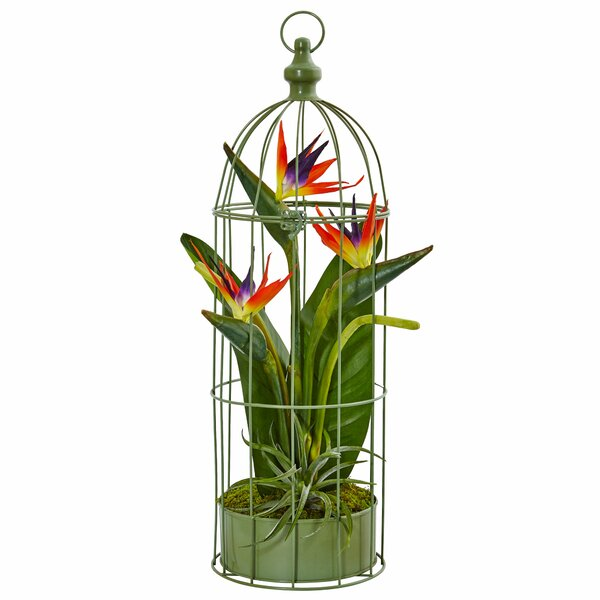 Bird Of Paradise Arrangement Wayfair