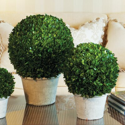 Preserved Boxwood Ball in Square Pot Greenery Topiary 2 Sizes