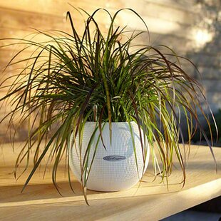 Puro Trend Self-Watering Plant Pot By Lechuza