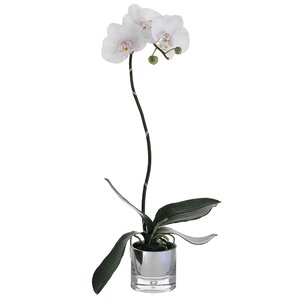 Phalaenopsis Bush Faux Orchid Floral Arrangement in Glass Plant