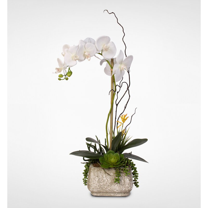 Rosecliff Heights Phalaenopsis Orchids Floral Arrangement In Pot Reviews Wayfair