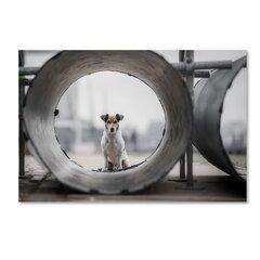 Dog Rectangle Photography You Ll Love In 2021 Wayfair