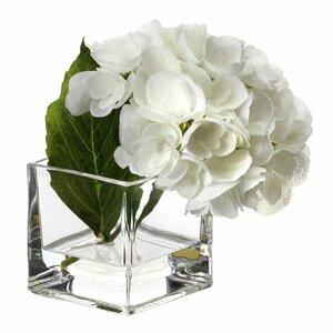 Hydrangea in Illusion Flower