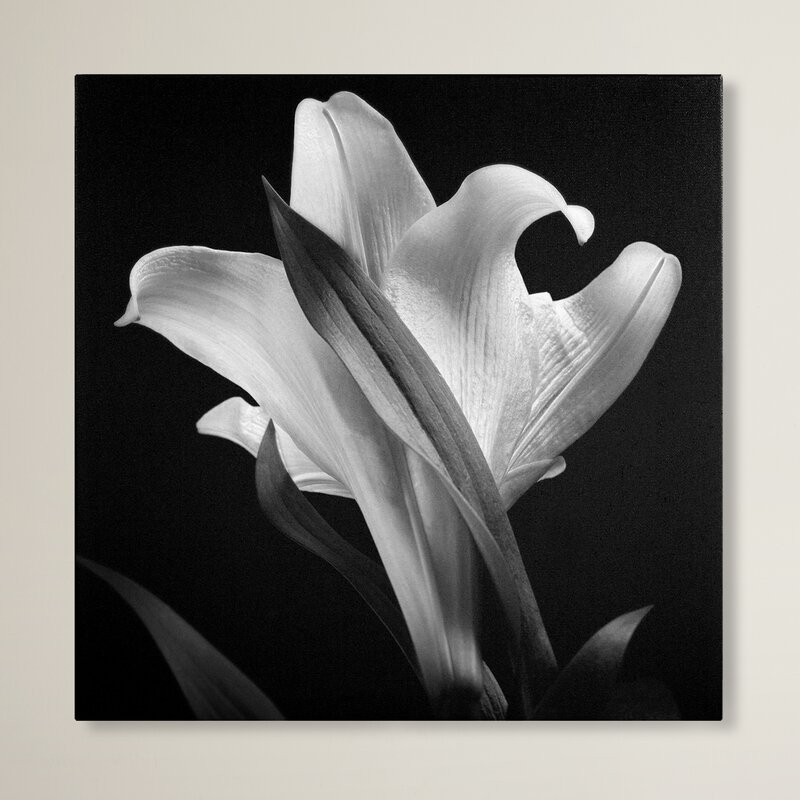 Trademark Global Lily Photographic Print On Wrapped Canvas Reviews Wayfair