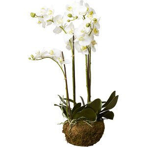 Phalaenopsis Faux Floral Orchids Flowers