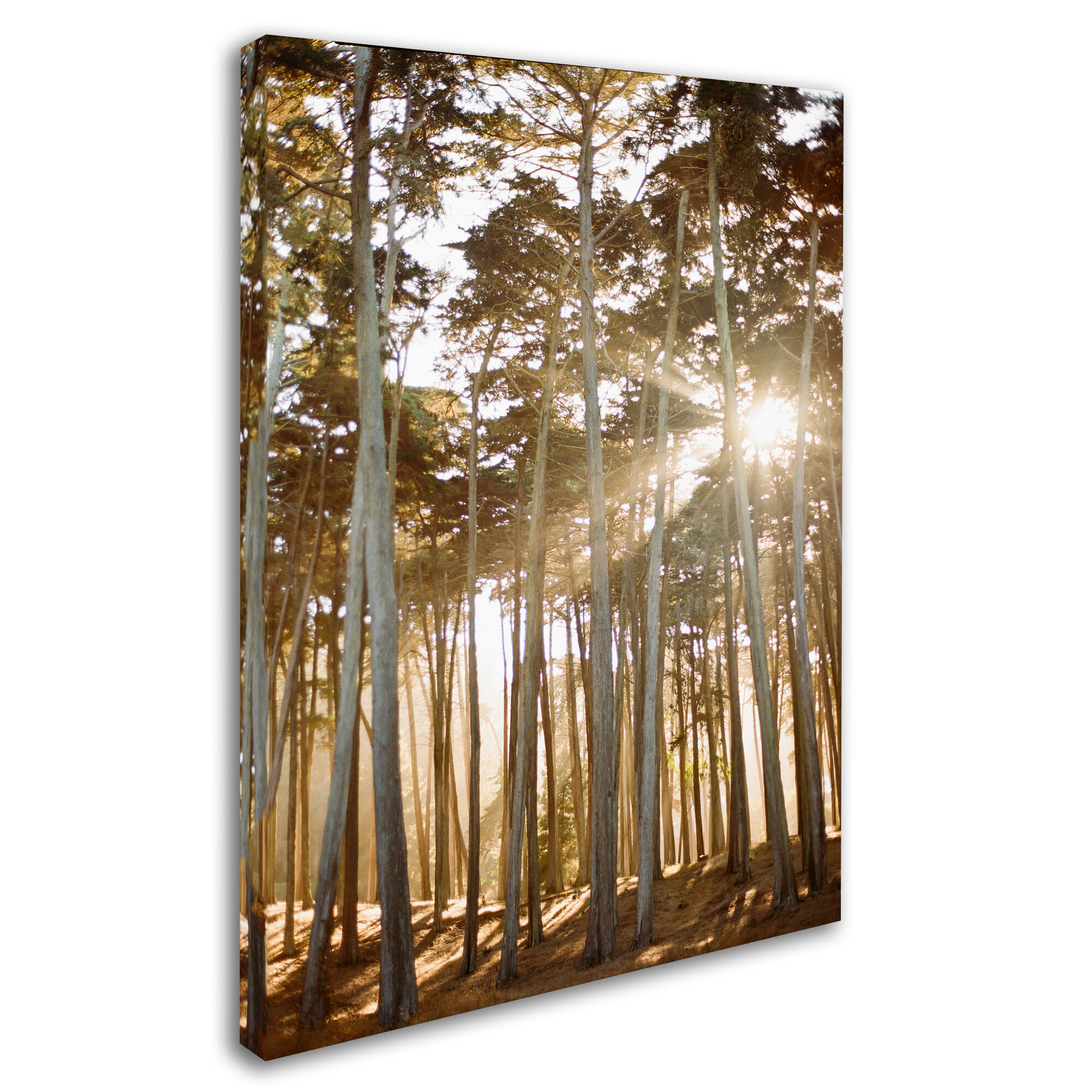 Trademark Art Presidio Sunset Trees By Ariane Moshayedi Photographic Print On Wrapped Canvas Wayfair