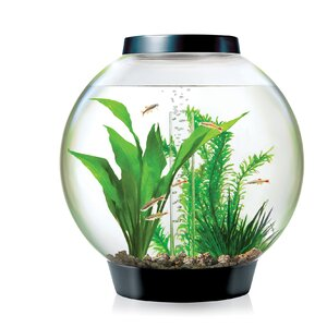 4 Gallon Classic Aquarium Bowl