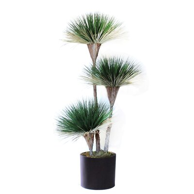 Natural Dried Variegated Dracaena Floor Bonsai Tree in Pot Bayou Breeze
