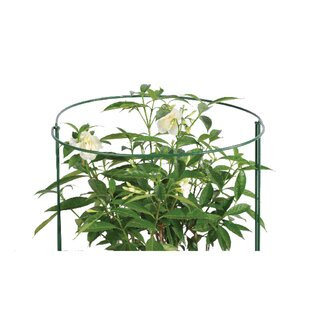 Plant Support by Arcadia Garden Products