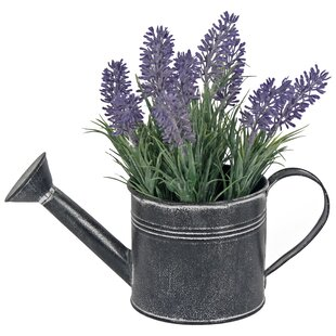 Lavender Plant In Watering Can By August Grove