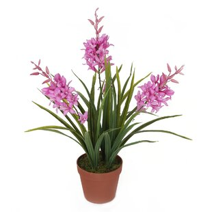 Desktop Byzantine Gladiolus Plant In Pot By Brambly Cottage