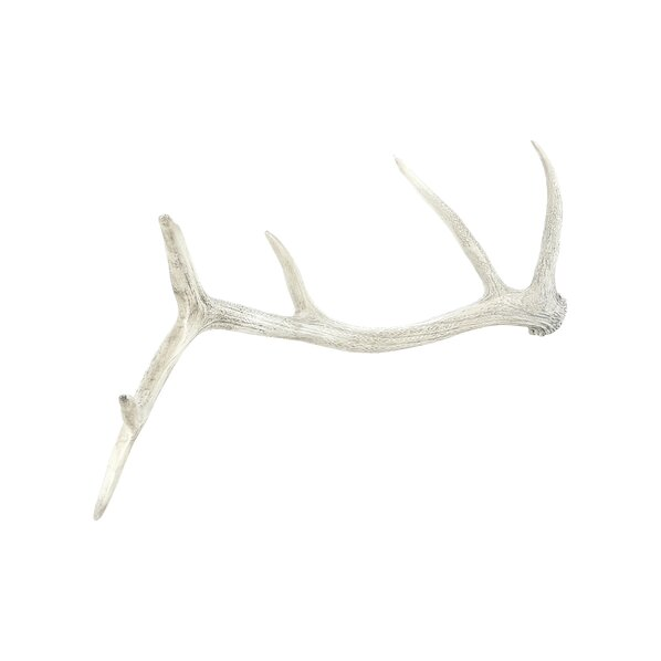Elk Antler Decor