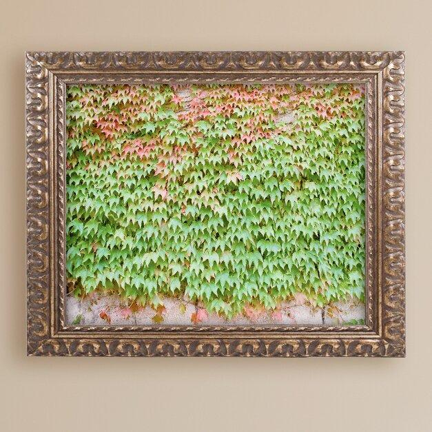 Trademark Art Ivy Wall By Ariane Moshayedi Framed Photographic Print Wayfair