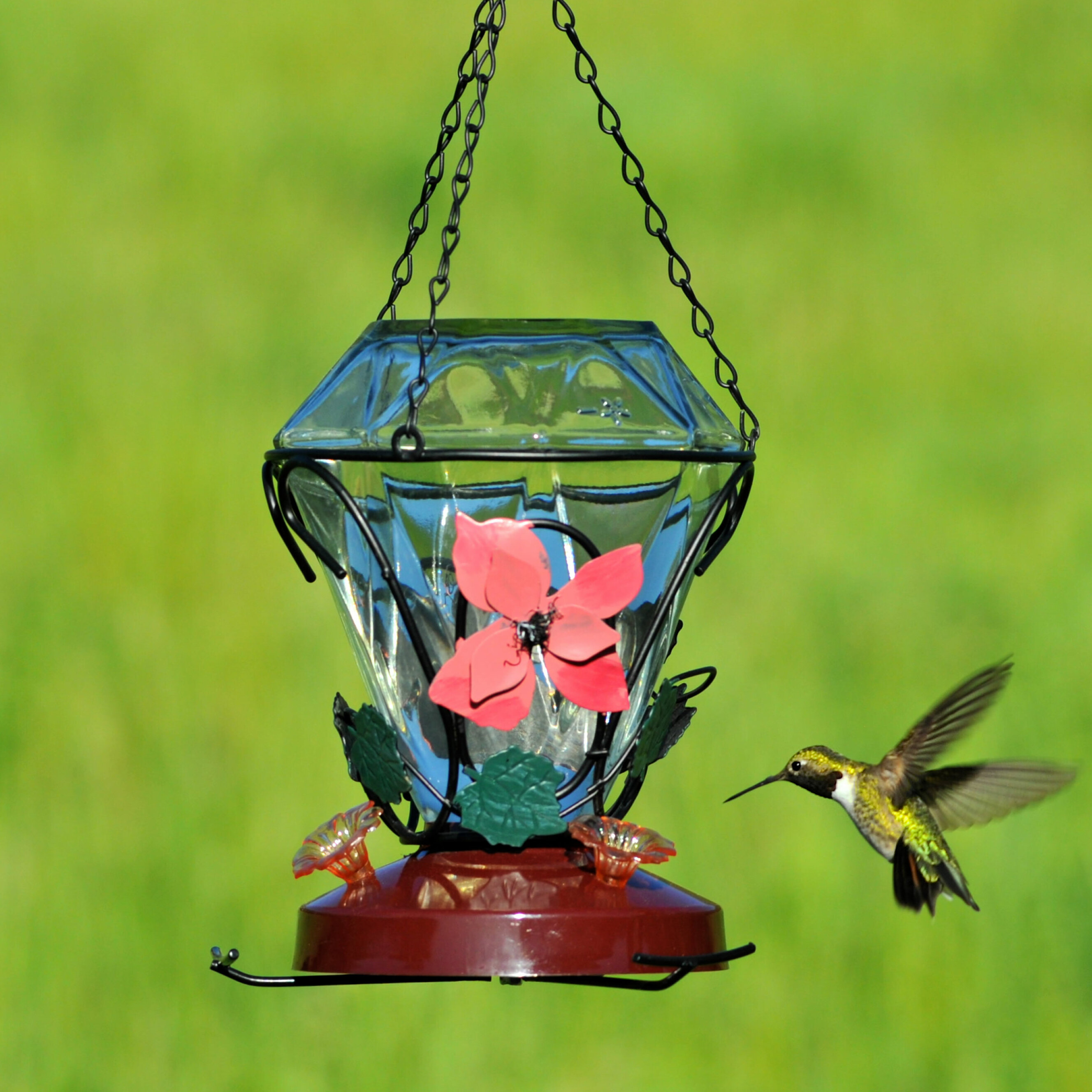 premium glass natures bird product blown home nectar products ounces and unique rave yellow hummingbird reviews pet with by hand birds feeders of decorative best feeder globe red hummingbirds