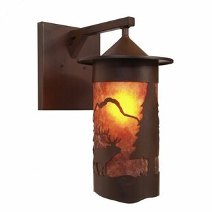 Best Reviews Pasadena 1-Light Outdoor Wall Lantern By Steel Partners
