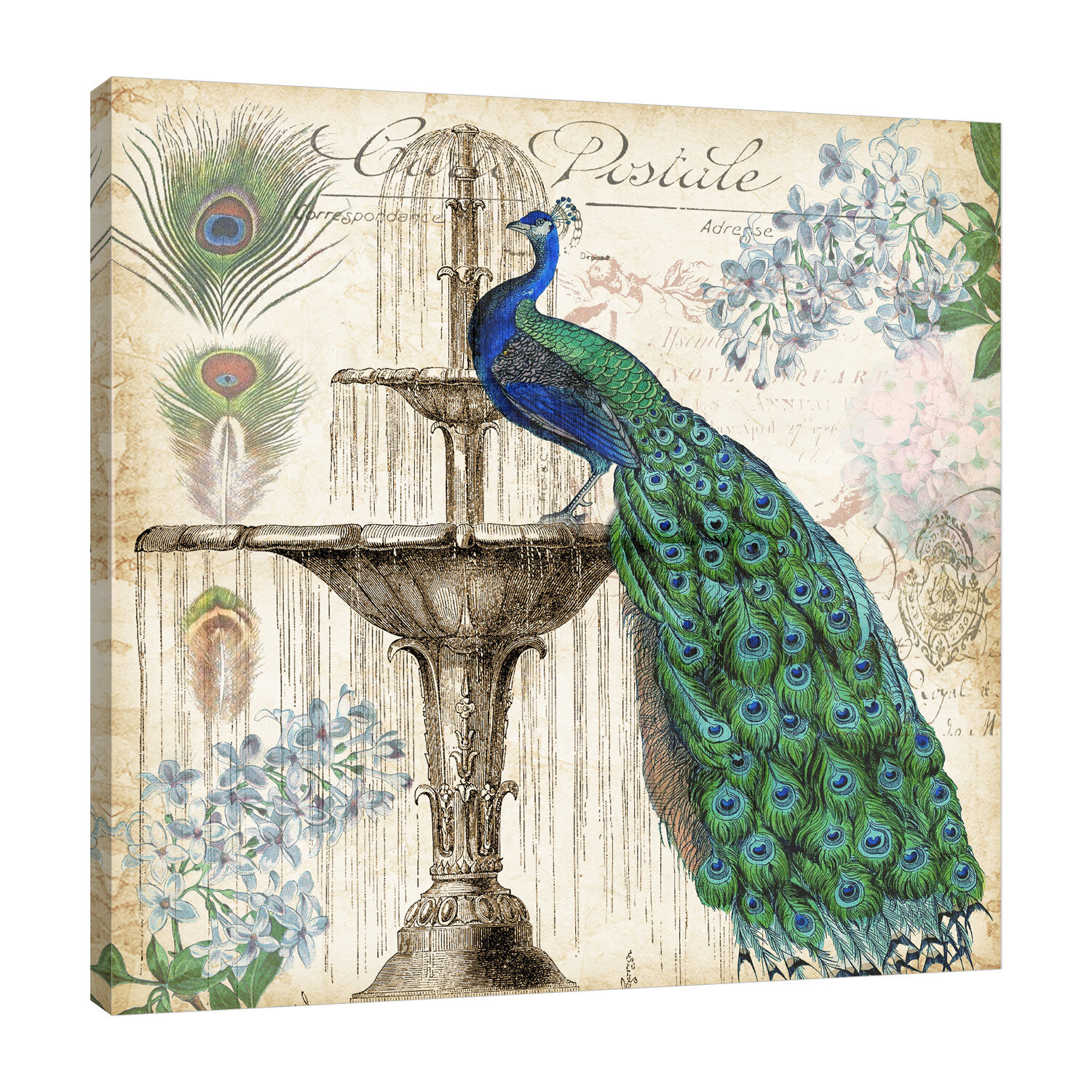 Ophelia Co Vintage Peacock Graphic Art Print On Wrapped Canvas Reviews Wayfair