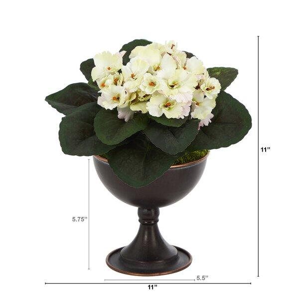 Primrue African Violet Floral Arrangements And Centerpieces In Planter Wayfair