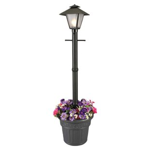 Reviews Cape Cod Outdoor 1-Light 80 Post Light By Patio Living Concepts